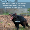 tasmanian devils wtf fun facts