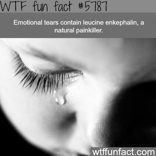 tears can act as a painkiller - WTF fun facts