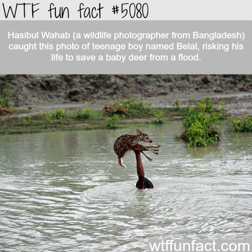 Teenage boy risks his life to save a baby deer from flood - WTF fun facts