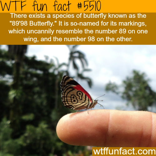 The 89′98 butterfly - WTF fun facts