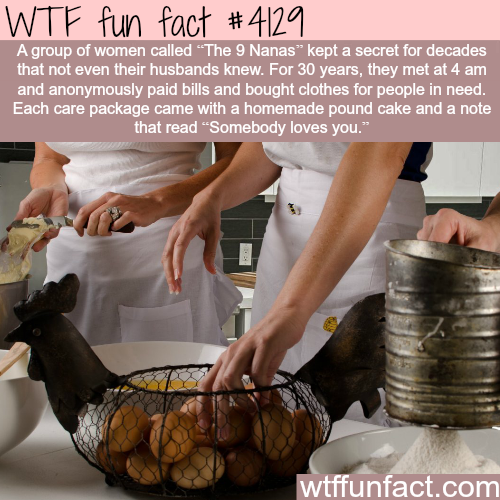 The 9 Nanas -  WTF fun facts