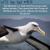 the albatross wtf fun facts
