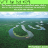 the amazon river wtf fun facts