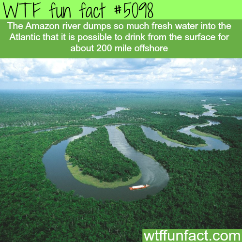 The Amazon River - WTF fun facts