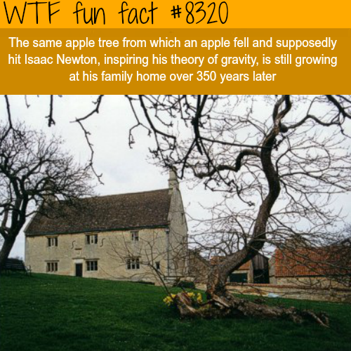The apple tree that hit Isaac Newton is still growing - WTF fun facts