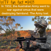 the australian army fought a war against the emus