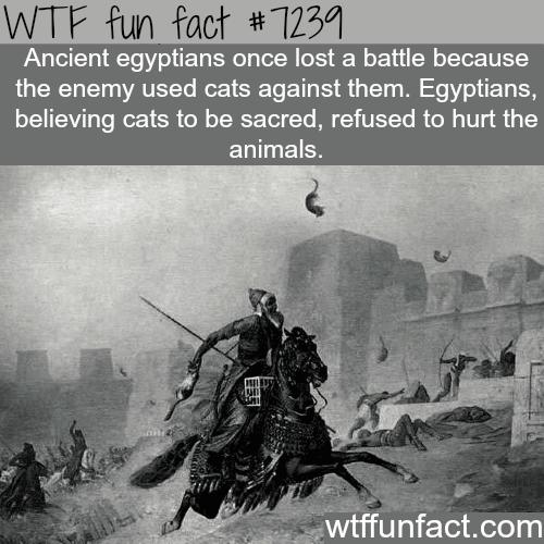 The Battle of Pelusium- WTF Fun Fact