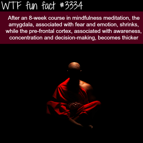 The benefit of meditation -  WTF fun facts