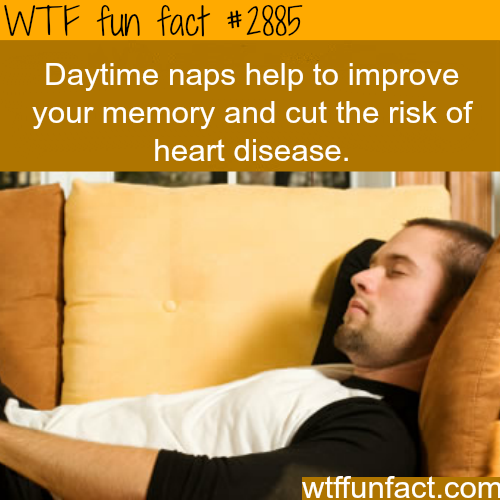 The benefits of daytime naps -  WTF fun facts