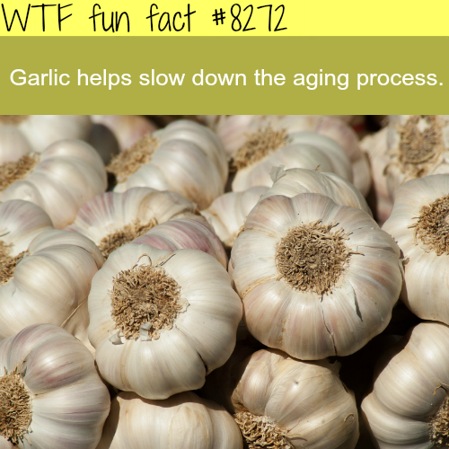 The benefits of garlic - WTF fun facts