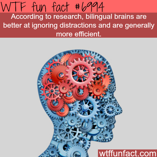 The benefits of knowing two languages - WTF fun fact