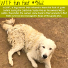 the best dog of the year wtf fun fact