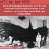 the biggest flying birds in history wtf fun fact