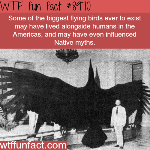 The biggest flying birds in history - WTF fun fact
