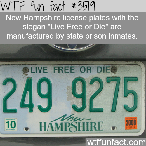 The biggest irony of all time - WTF fun facts