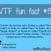 the bird turkey in turkish