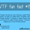 the bird turkey in turkish