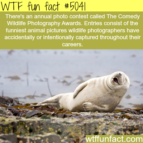 The Comedy Wildlife Photography Awards - WTF fun facts
