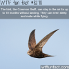 the common swift wtf fun facts