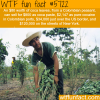 the cost of coca leaves wtf fun facts
