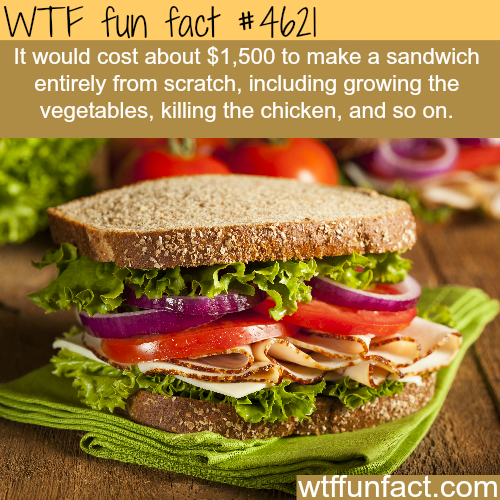 The cost of creating a sandwich from scratch - WTF fun facts