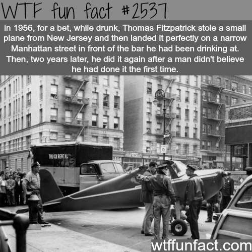 The craziest drunk bet ever made - WTF fun facts