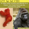 the craziest listings on ebay wtf fun facts
