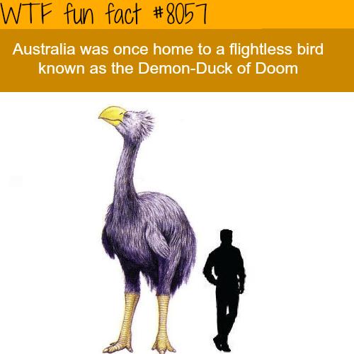 The Demon-Duck of Doom - WTF fun fact