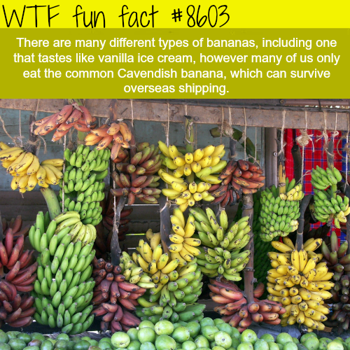 The different types of bananas - WTF fun facts