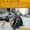the dog and will smith in i am legend