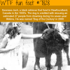 the dog of the century wtf fun facts
