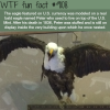 the eagle in us currency wtf fun fact