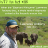 the elephant whisperer lawarence anthony wtf