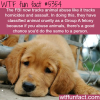 the fbi now tracks animal abuse wtf fun facts