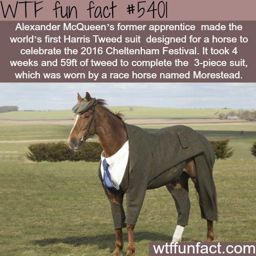 The first horse to wear a suit - WTF fun facts