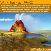 the fly geyser wtf fun facts