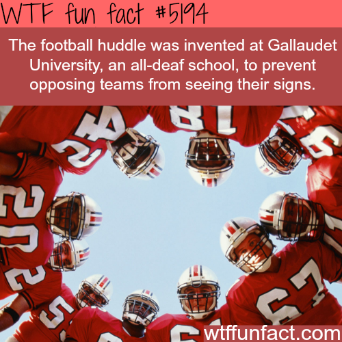 The football huddle - WTF fun facts