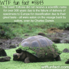 the giant tortoise wtf fun facts