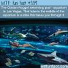 the golden nugget swimming pool and aquarium