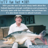 the goliath tigerfish
