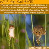 the harvest mouse wtf fun facts