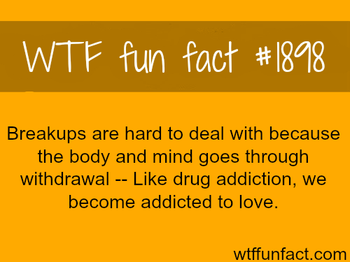 The health problems of love and breakups - WTF fun facts