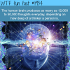 the human brain facts