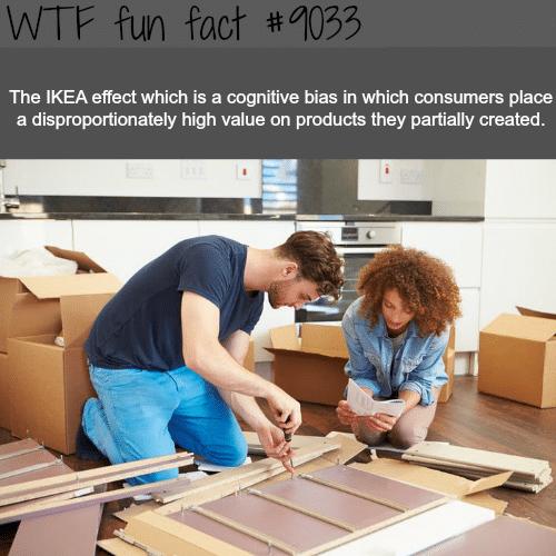 The Ikea effect - WTF fun facts
