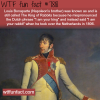 the king of rabbits wtf fun facts