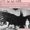 the largest flying bird wtf fun facts
