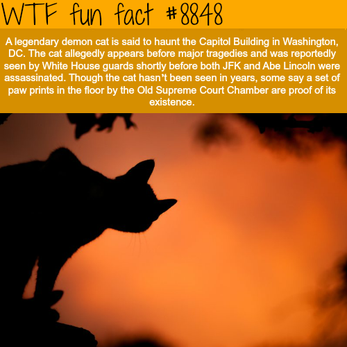 The Legendary Demon Cat of Capitol Building - WTF fun facts