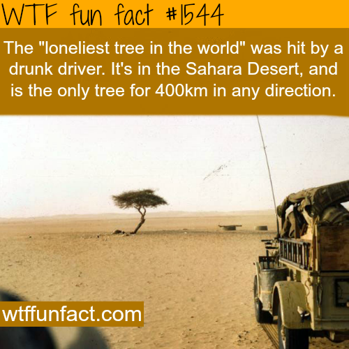 The loneliest tree in the world. wtf fun facts