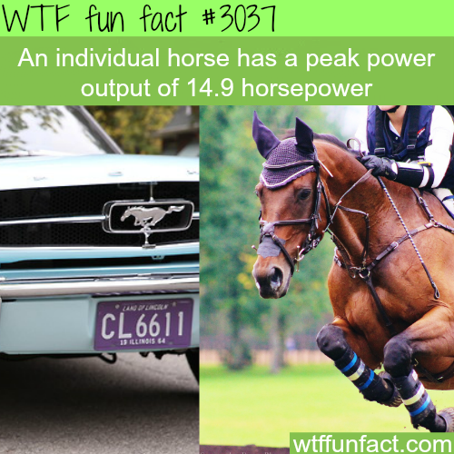 The meaning of horsepower -  WTF fun facts