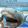 the megamouth shark rarest types of sharks